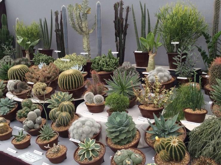 Projekty,  Ogród zaprojektowane przez Craig House Cacti