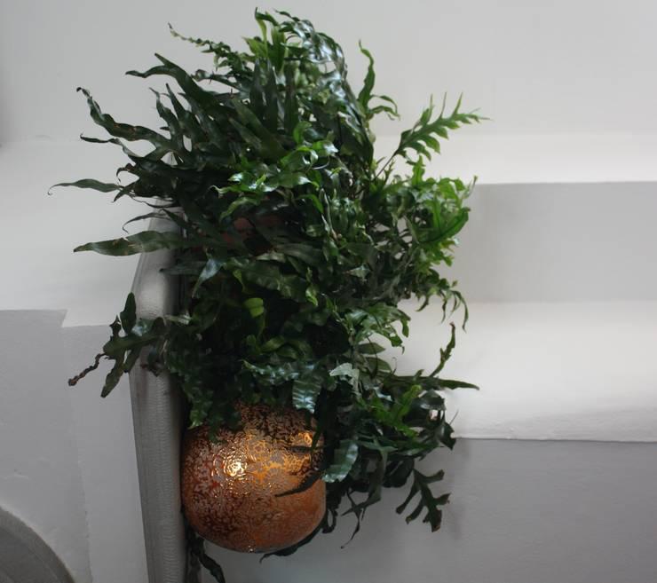 Angolo Verde: Studio in stile  di Tiziano Codiferro -  Master Gardener