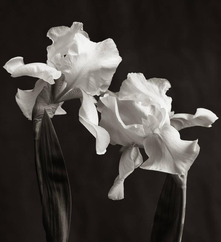 Fine Art Photograhy:   by Richard Freestone Photography