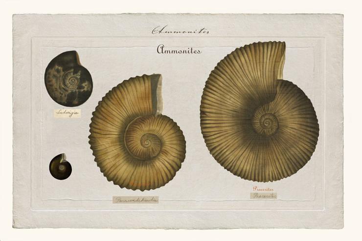 Ammonites N°11: Art de style  par JEAN-JACQUES BEAUME