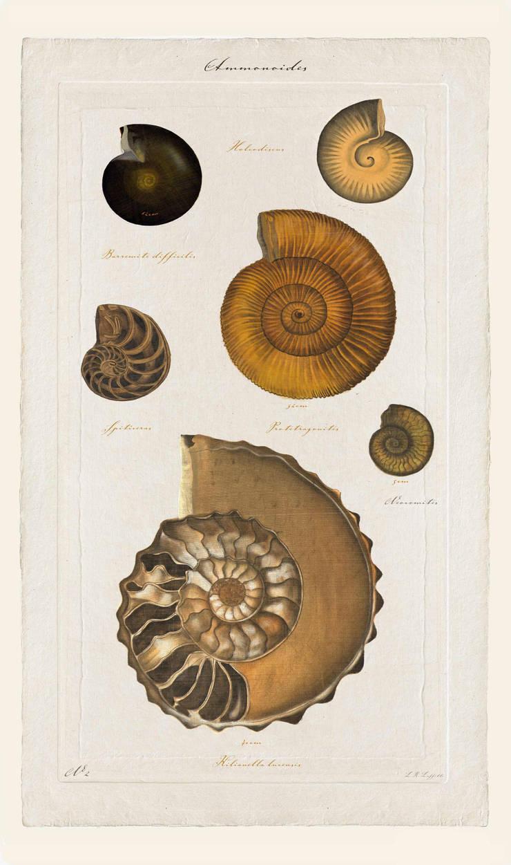 Ammonites N°3: Art de style  par JEAN-JACQUES BEAUME