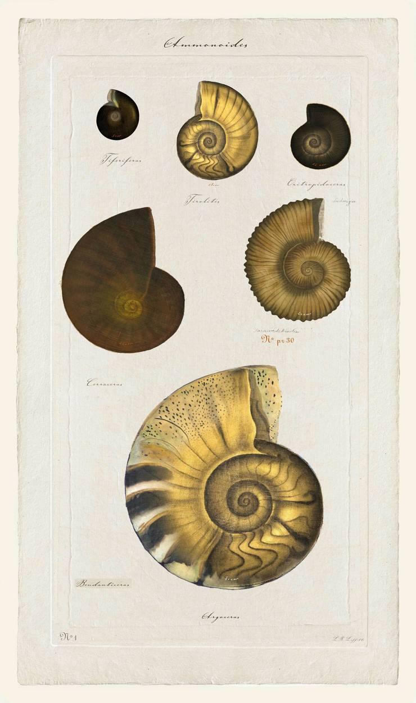 Ammonites N°4: Art de style  par JEAN-JACQUES BEAUME