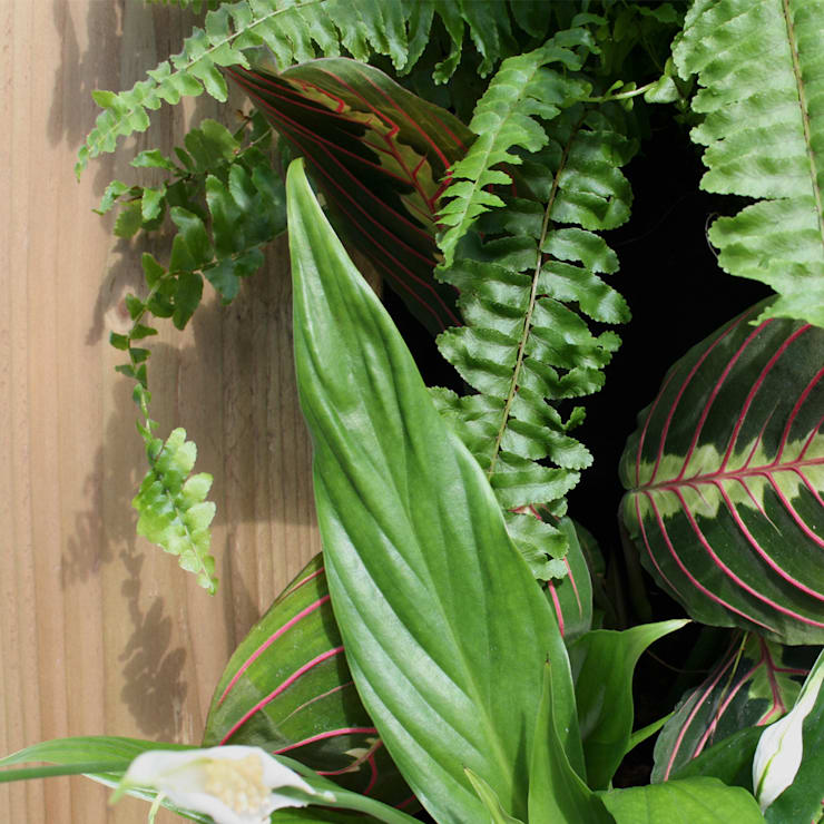 Vertical Garden - Antique Pine:  Artwork by Living Interiors UK