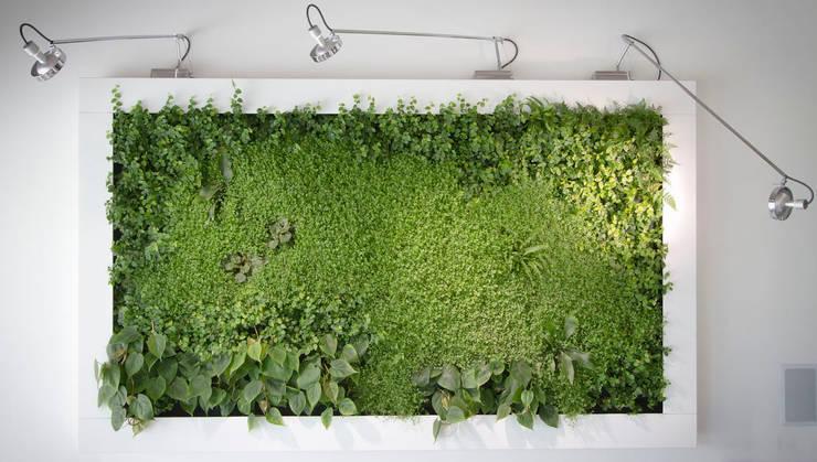 Quadro vegetale Sundar Italia: Casa in stile  di Sundar Italia,