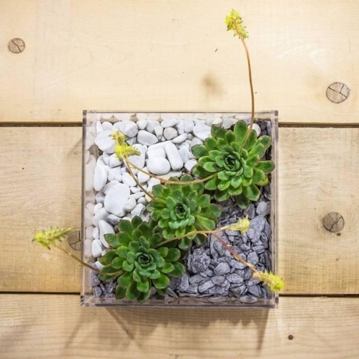 Niwabox – Giardini in scatola: Casa in stile  di Designtrasparente,