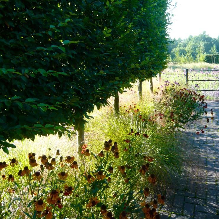 Several acres near Amersham:   by Joanne Alderson Design