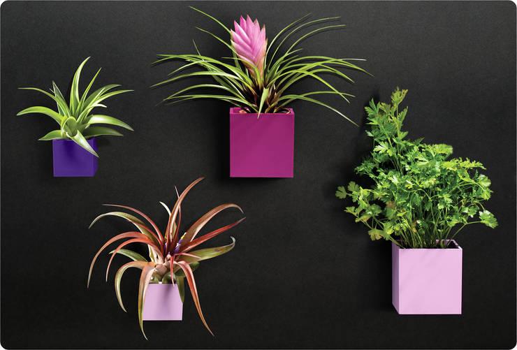 KalaMitica Magnetische Blumentöpfe & Metalltafel:  Raumbegrünung von Greenbop