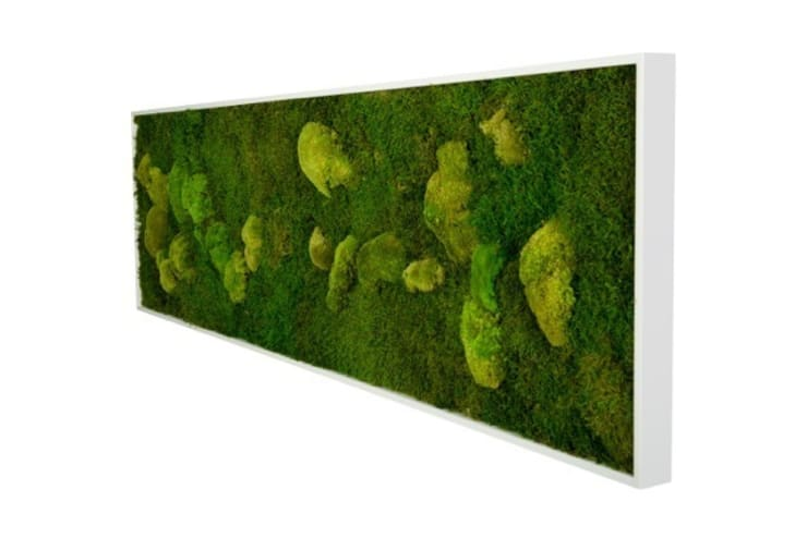 Moosbild:  Raumbegrünung von Greenbop