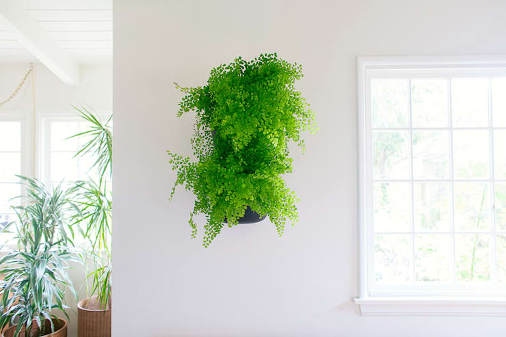 NEW Living Wall Planter:   by Woolly Pocket
