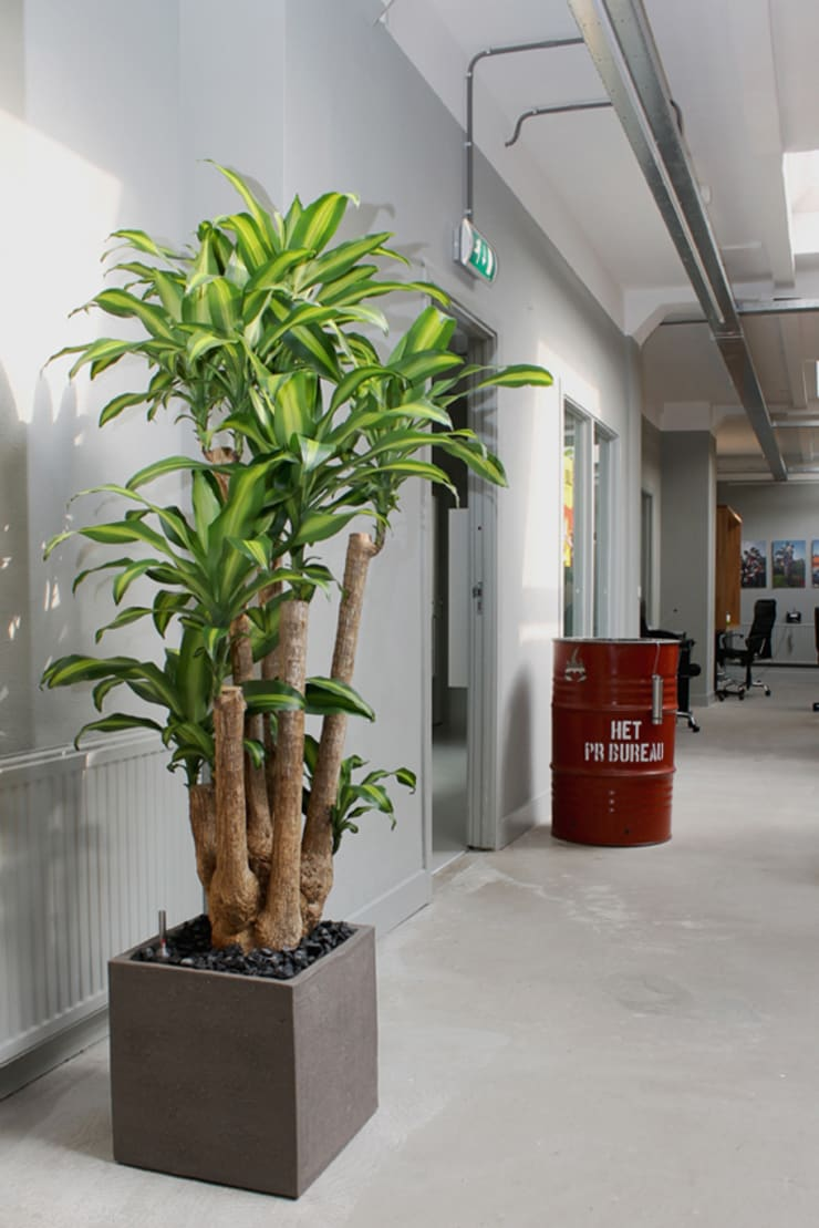 Offices in The Netherlands:  Kantoren & winkels door Boom in Huis  / Baum im Haus / Trees in the Home