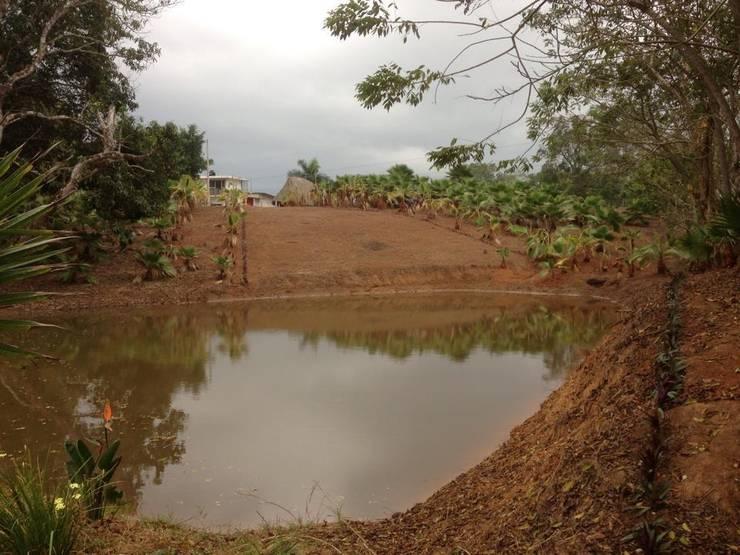 Jardin en Finca Mexicana, Veracruz: Jardines de estilo  de Paisajismo Digital