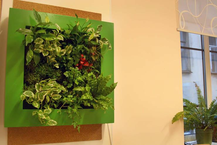 Фитокартина в школьном классе: Рабочие кабинеты в . Автор – Зеленый мир