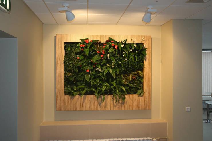 Фитокартина в столовом помещении: Столовые комнаты в . Автор – Зеленый мир