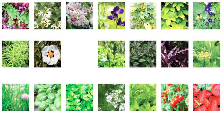 Palette végétale:  de style  par a.Calu Paysagiste concepteur