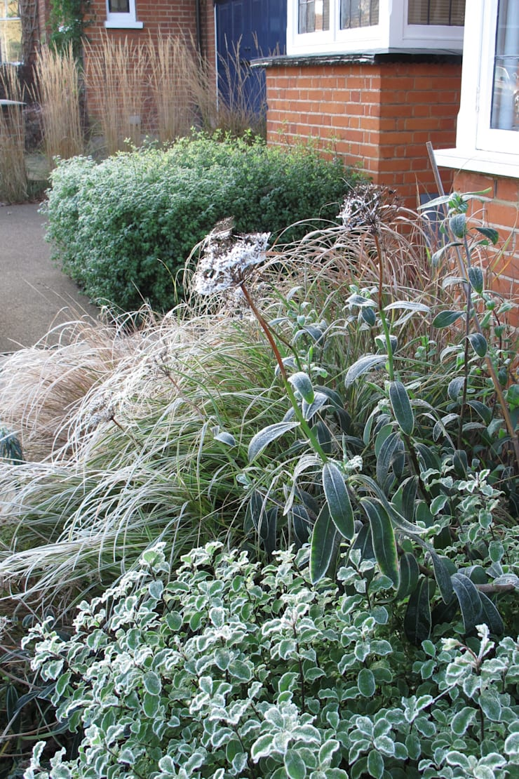 winter interest plants:  Garden  by Fenton Roberts Garden Design