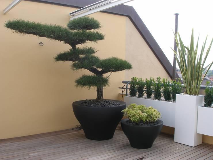 Piante come sculture (foto 1): Terrazza in stile  di Midori srl