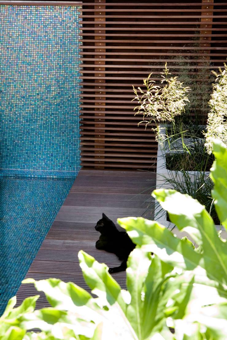 Patiotuin zuid holland:  Tuin door Andrew van Egmond (ontwerp van tuin en landschap)