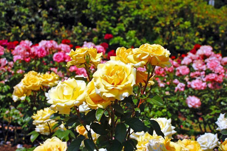 Сад  в . Автор – Pflanzenfreude.de