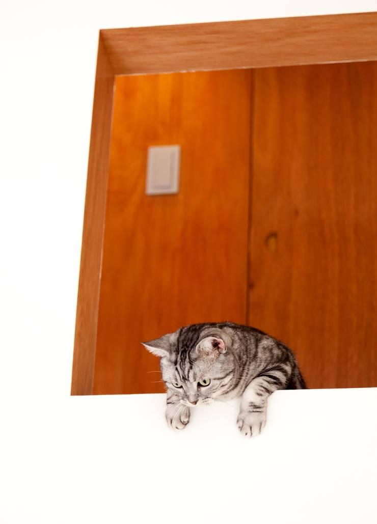 猫と暮らす家: Unico design一級建築士事務所が手掛けたリビングです。