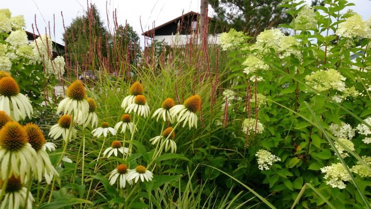 Pflanzplanung:  Garten von Blumen & Gärten,Modern