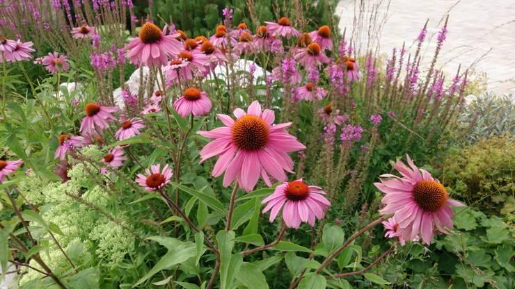 Pflanzplanung Hotelzufahrt Chiemsee:  Garten von Blumen & Gärten,Modern