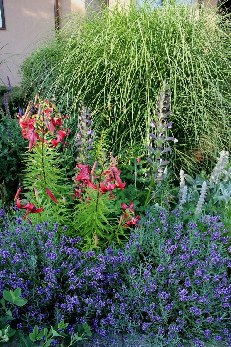Lawenda, lilie oraz akanty: styl , w kategorii  zaprojektowany przez Garden Idea - Projektowanie Ogrodów,Klasyczny