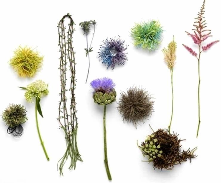 코사지: Salvia Garden의  아트워크