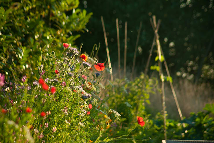 poppies in veg garden: country Garden by Katherine Roper Landscape & Garden Design