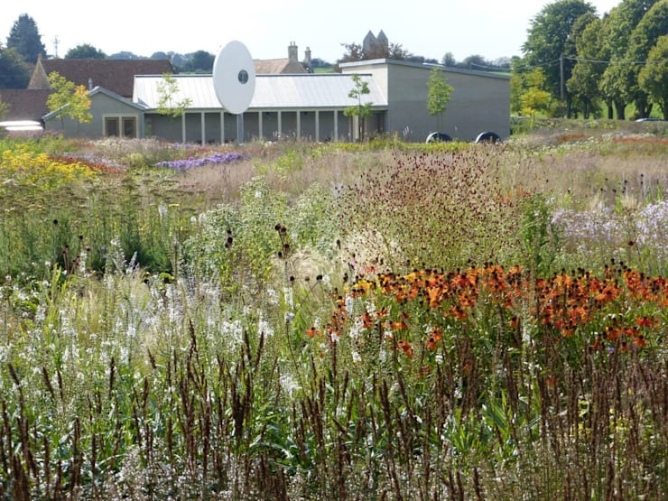 Oudolf Meadow:  Garden by Petherick, Urquhart & Hunt Landscape Consultancy
