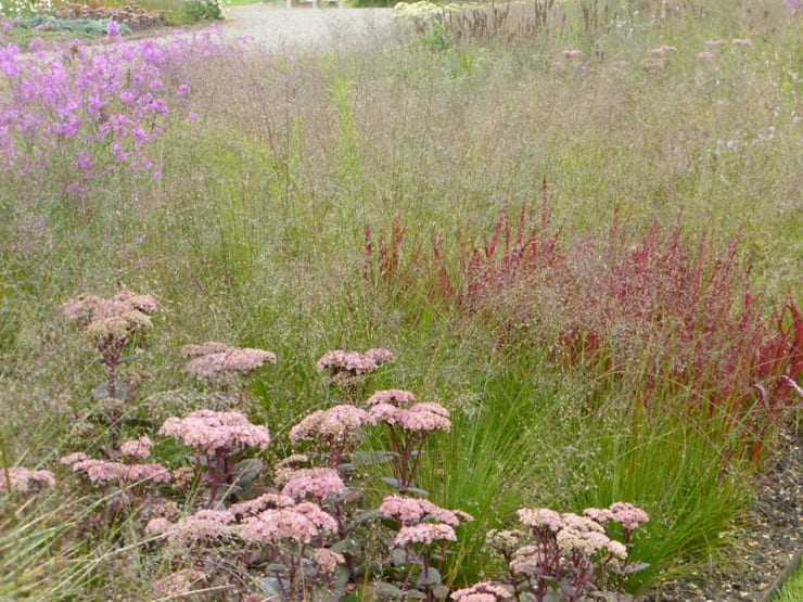 Sporobolus grass planting:  Garden by Petherick, Urquhart & Hunt Landscape Consultancy