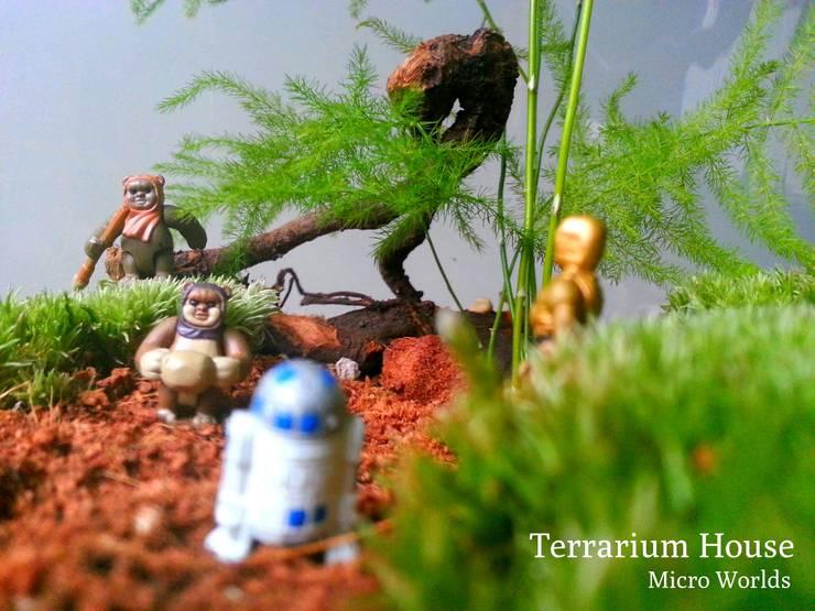 Terrarium House – Terrarium 'Star Wars- Ewok Village':  tarz Ev İçi