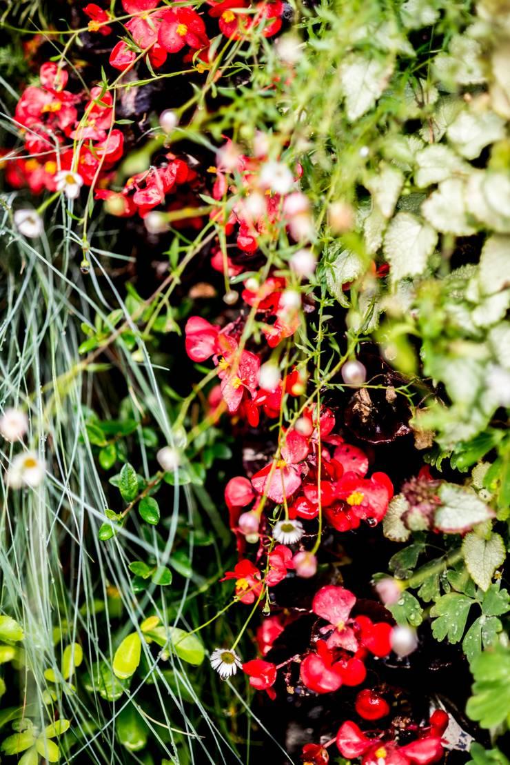 Begonia: Jardines de estilo  de thesustainableproject