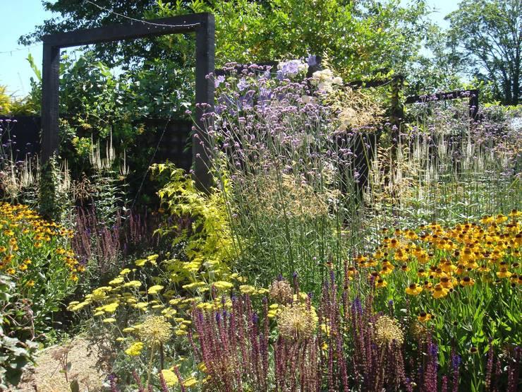 Long, narrow, contemporary garden design, Woking, Surrey:  Garden by Linsey Evans Garden Design