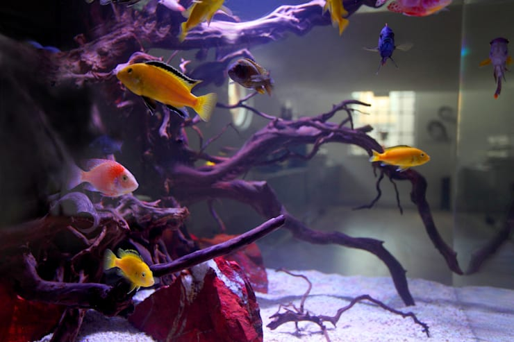 Livings de estilo moderno por Aquarium Architecture