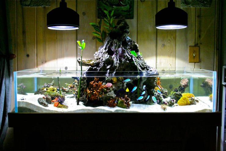 Acheter Un Aquarium À quoi penser avant d'acheter un aquarium?