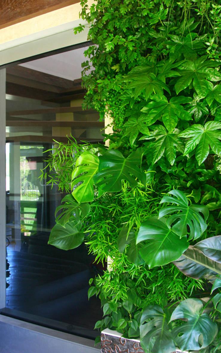 Зимний сад: Озеленение  в . Автор – RaStenia
