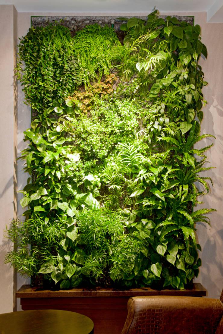 Частный клиент, Санкт-Петербург: Озеленение  в . Автор – RaStenia