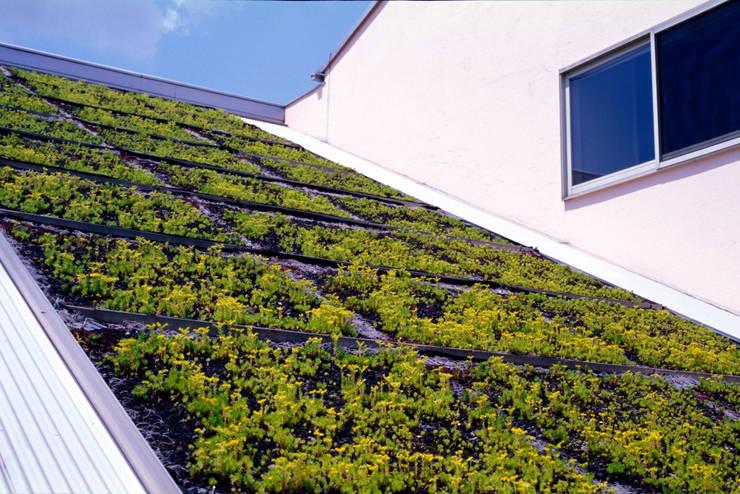 屋根緑化: ジェイ石田アソシエイツが手掛けた家です。,オリジナル