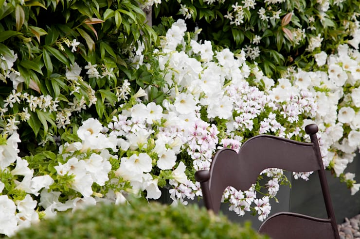 Cameron Landscapes and Gardensが手掛けた庭