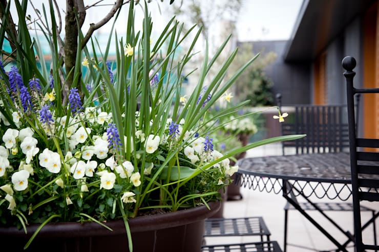 Beautiful planters:  Garden by Cameron Landscapes and Gardens