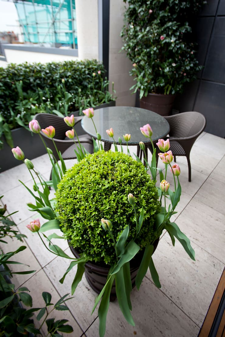 Somewhere to sit:  Garden by Cameron Landscapes and Gardens