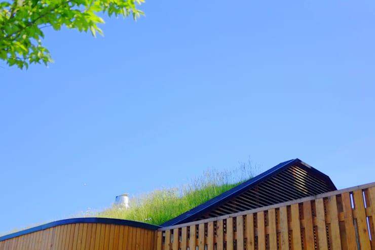 Commercial and public green roofs:  Houses by Organic Roofs