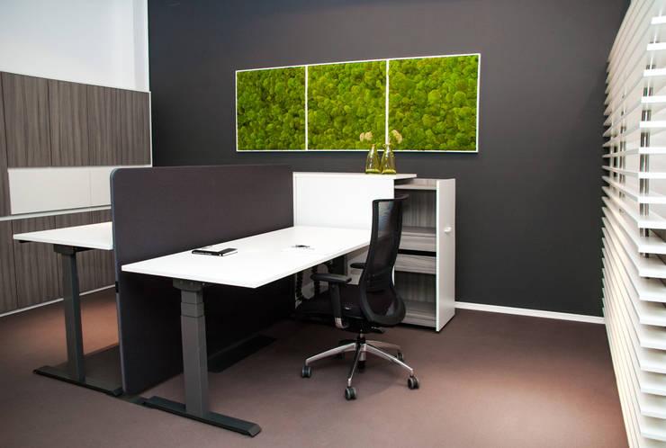 Einrichtung bei Febrü mit Kugelmoosbildern:  Raumbegrünung von FlowerArt GmbH | styleGREEN