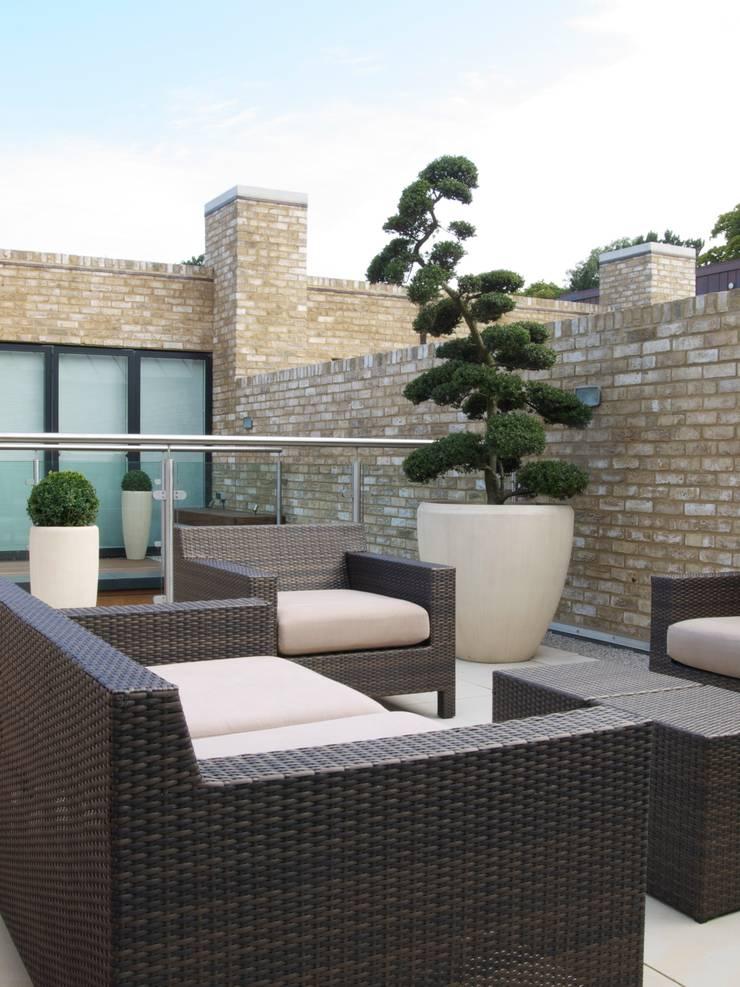 Ilex crenata Balcones y terrazas de estilo minimalista de Paul Dracott Garden Design Minimalista