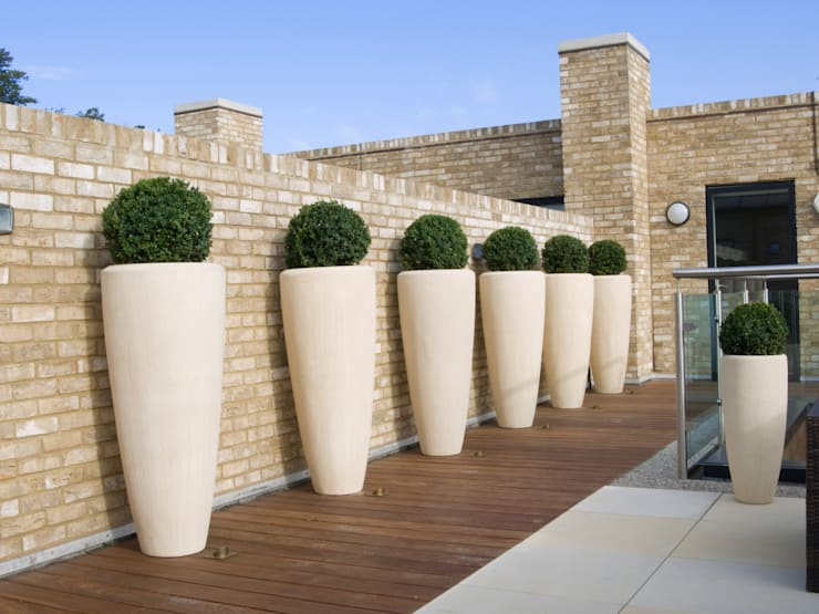 Buxus Containers:  Terrace by Paul Dracott Garden Design