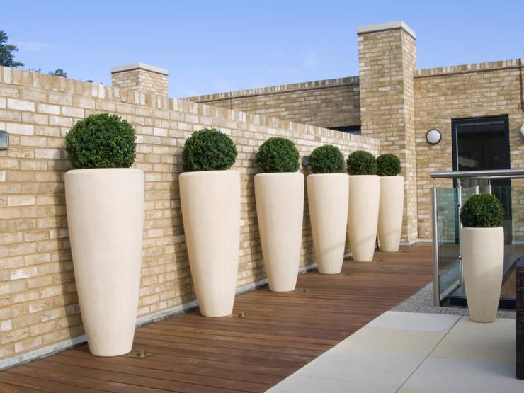 Buxus Containers Balcones y terrazas de estilo minimalista de Paul Dracott Garden Design Minimalista