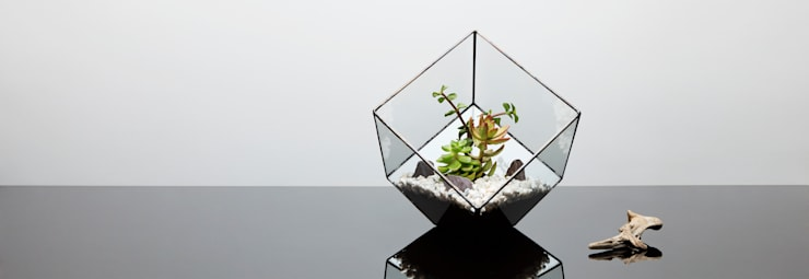 Terrarium Installations:  Living room by The Urban Botanist