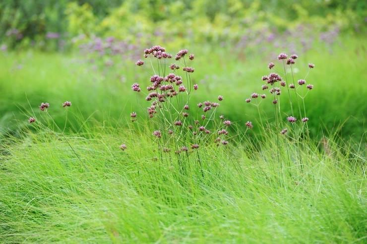 Jardins  por Hendriks Hoveniers