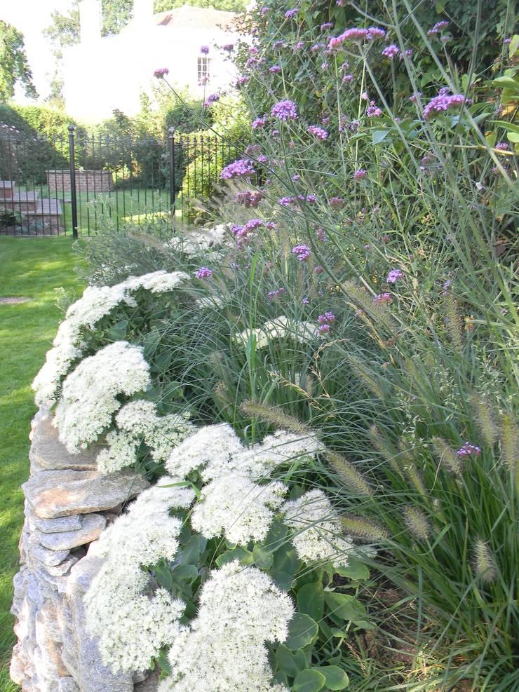 Verbenas and sedums.:   by Westacott Gardens
