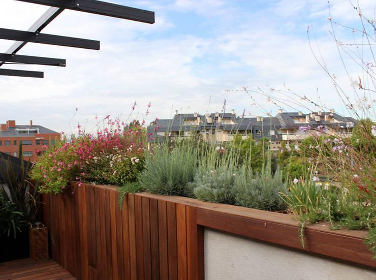 Terraza en El Encinar de la Moraleja: Terrazas de estilo  de La Habitación Verde
